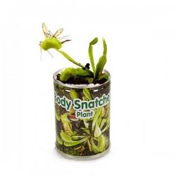 растение-хищник Венерина мухоловка в банке