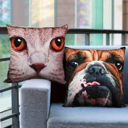 Koera-kassi pildiga dekoratiivadi